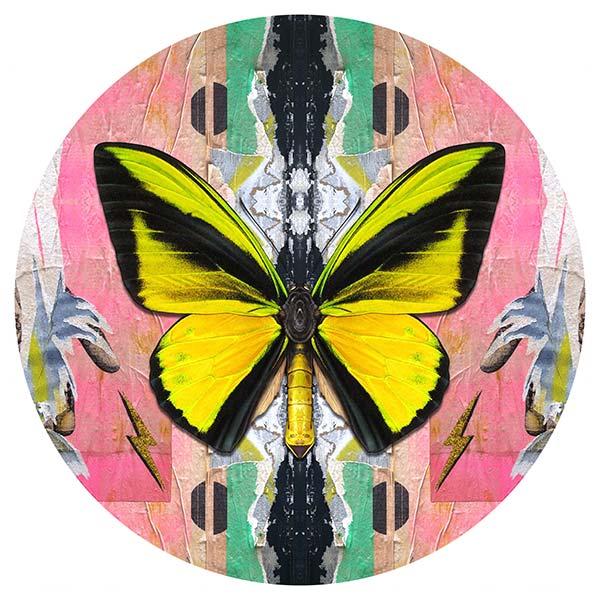 Birdwing_on_Calvin_81cmcirc-1250