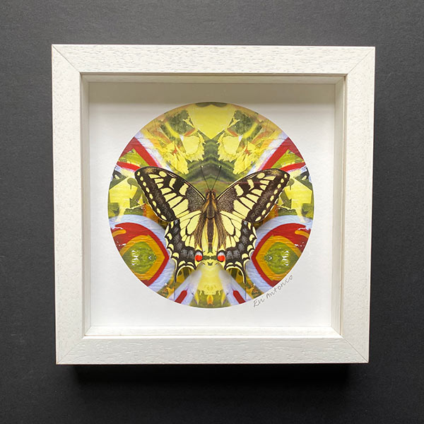 Jerome-street-swallowtail