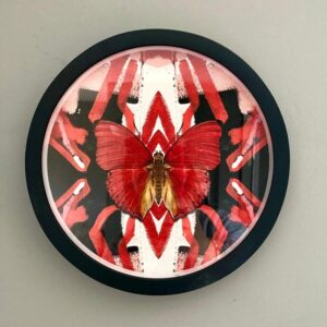 evi-antonio-red-butterfly